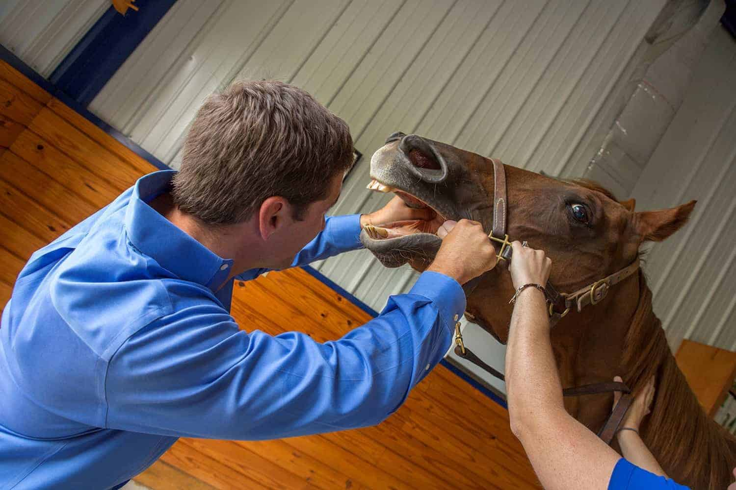 Head First: Equine Head and Sinus Issues