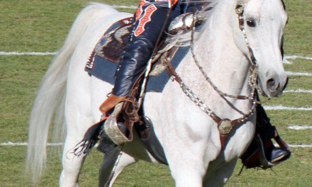Denver Broncos' Equine Mascot Thunder Takes Manhattan