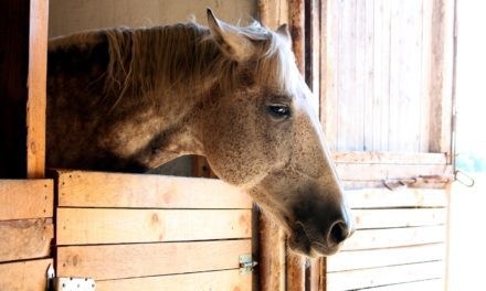 Systemic Pain Management in Horses