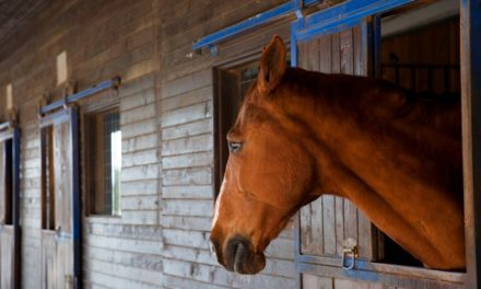 Stress Reduction and Equine Gastric Ulcer Prevention