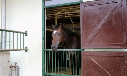 Hearing Loss in Adult Horses
