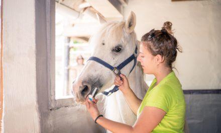 NSAIDs Might Impair Horses' Response to Influenza Vaccines