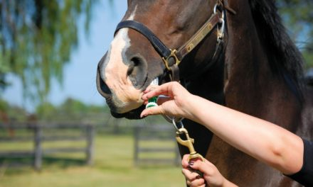 Horse Deworming Facts