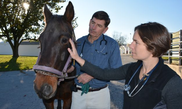 Penn Vet Faculty to Explore Imaging, Neurology at First Tuesday Lecture