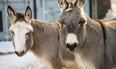 Food Enrichment Activities for Donkeys