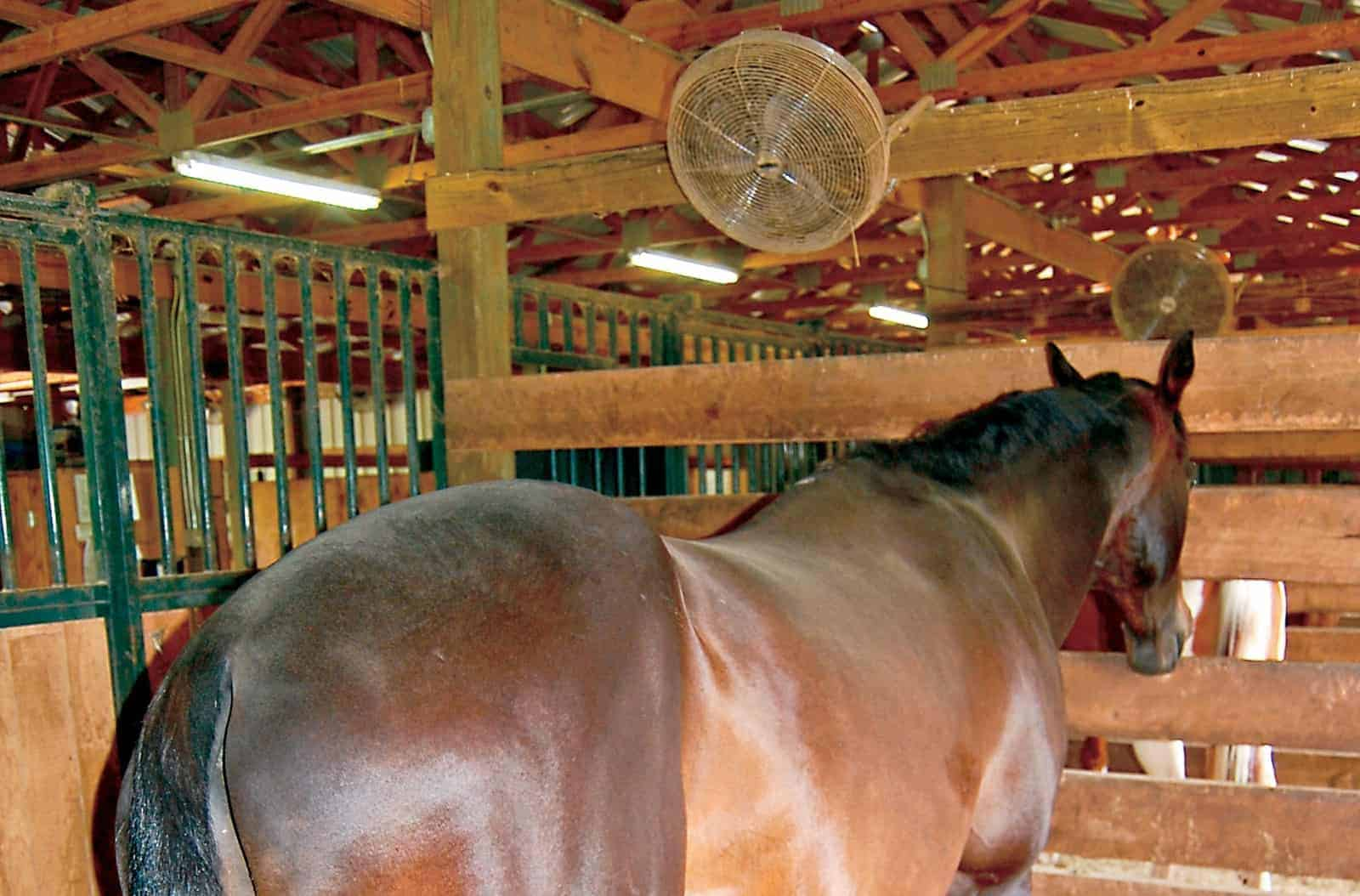 Anhidrosis in Horses