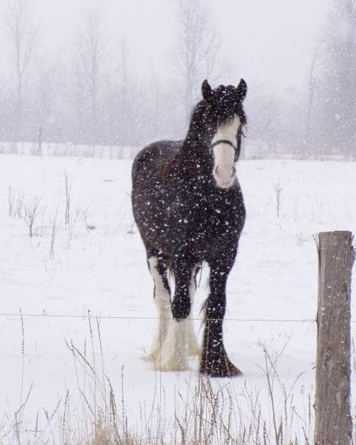 Winter Horse Care Tips for Owners