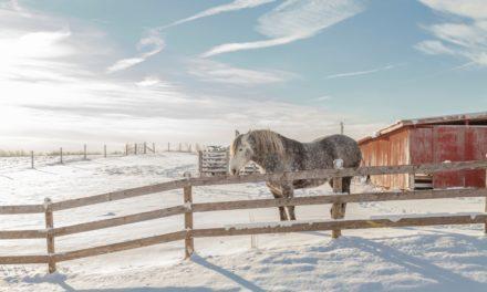 Tips for Preparing Your Horse Barn for Winter