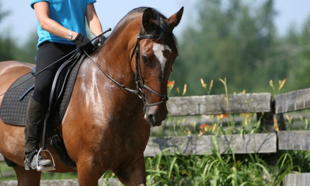 Managing DDSP in Sport Horses Medically