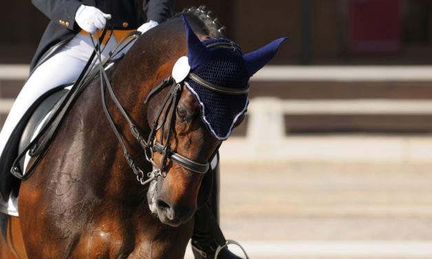 Can Dressage Cause Neck and Back Pain in Horses?
