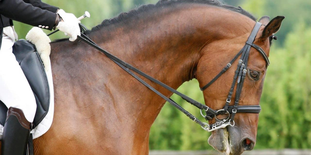 Researcher: Strive to Recognize Happy Horse Behavior
