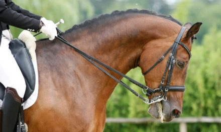 FEI to Review Dressage Training Methods