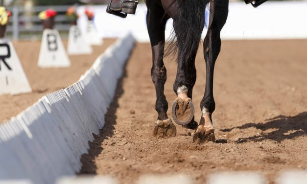 Horse Arena Footing Facts