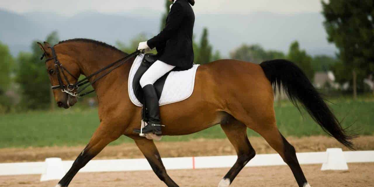 Study: Suspensory Injuries Could be Linked to Excessive Extended Trot