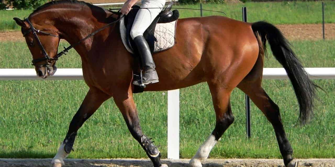 Researchers Study Horses' Fearfulness and Learning Ability
