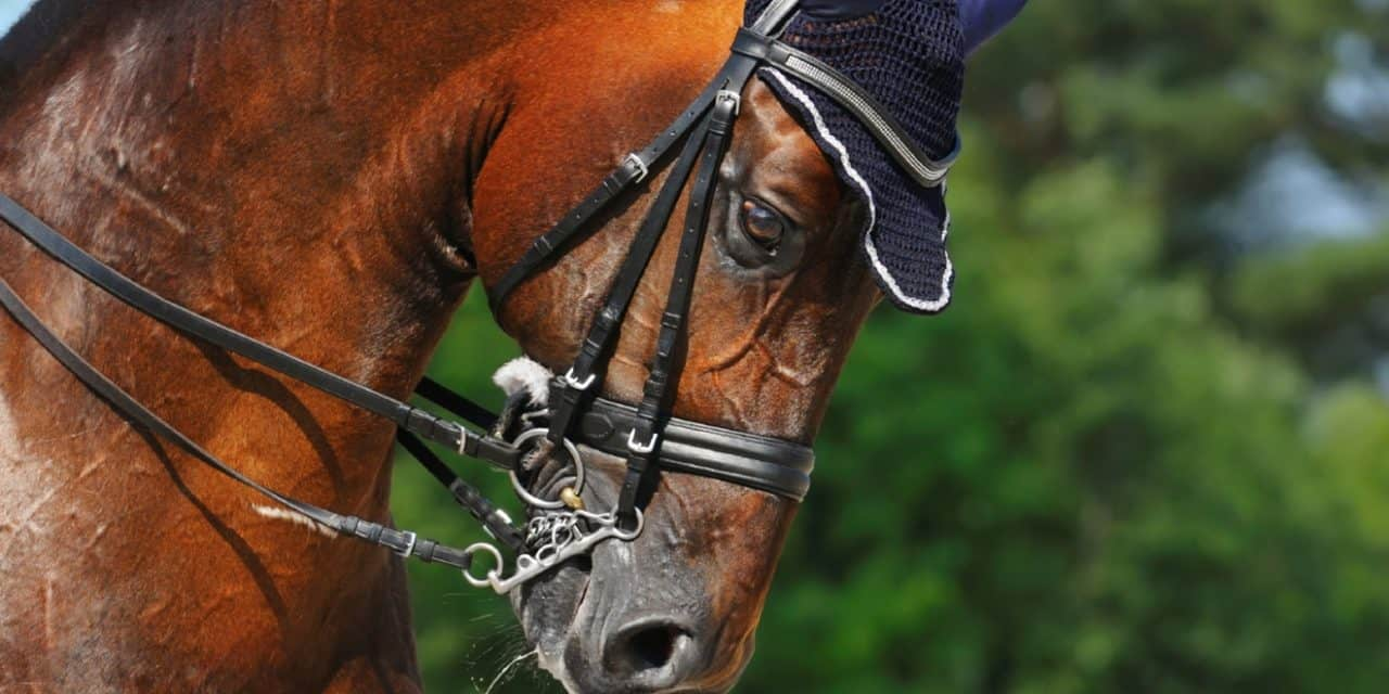 Study: Nosebands Can Cause Horses Stress