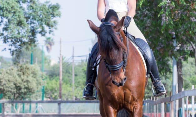 Prepurchase Exams for Upper-Level Sport Horses