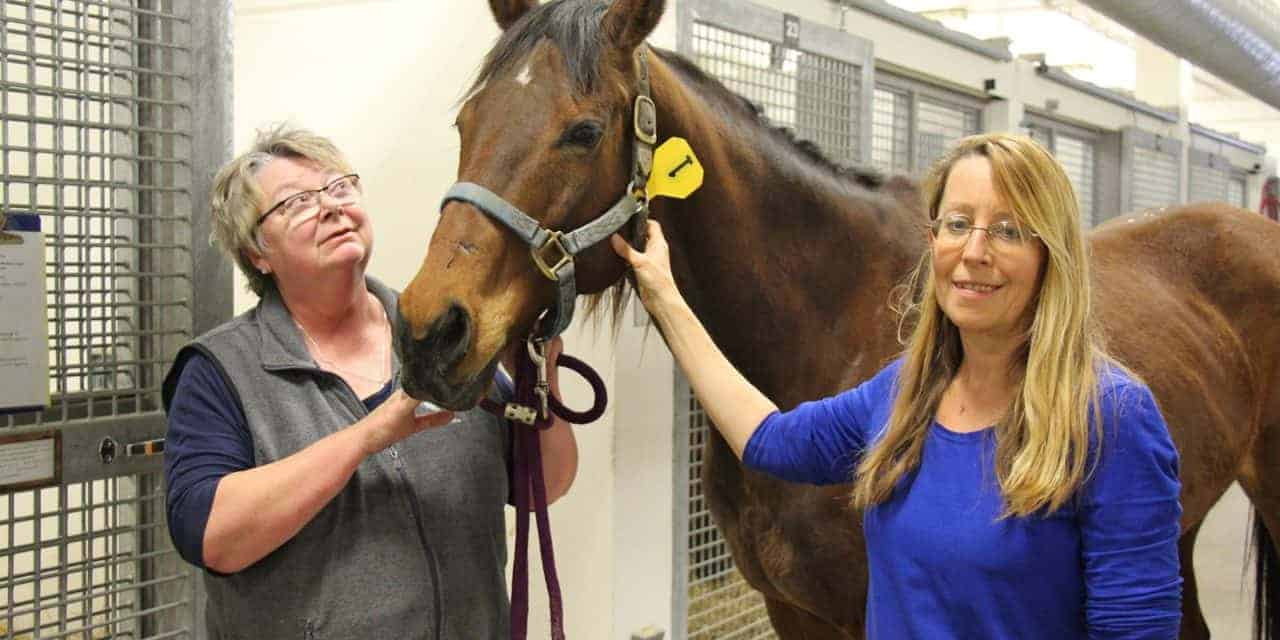 New Standards for Evaluating Blood Clotting in Horses