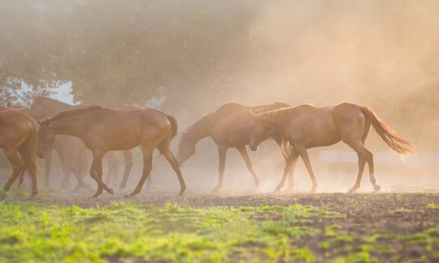 Controlling Dust on Horse Properties