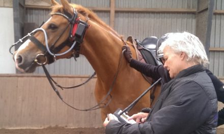 Equine Upper Airway Noise: What Does it Mean?