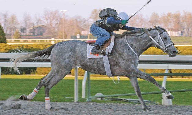 Diagnosing Equine Upper-Airway Abnormalities