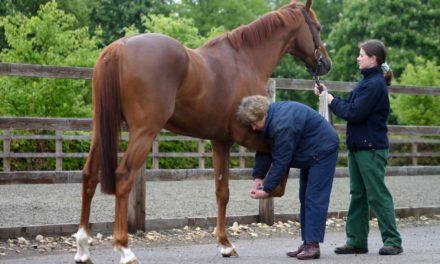 Equine Lameness: Clinical Judgment Meets Diagnostic Imaging