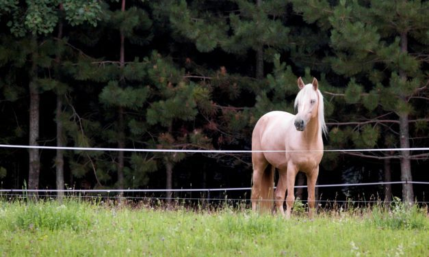The Ins and Outs of Temporary Horse Fencing