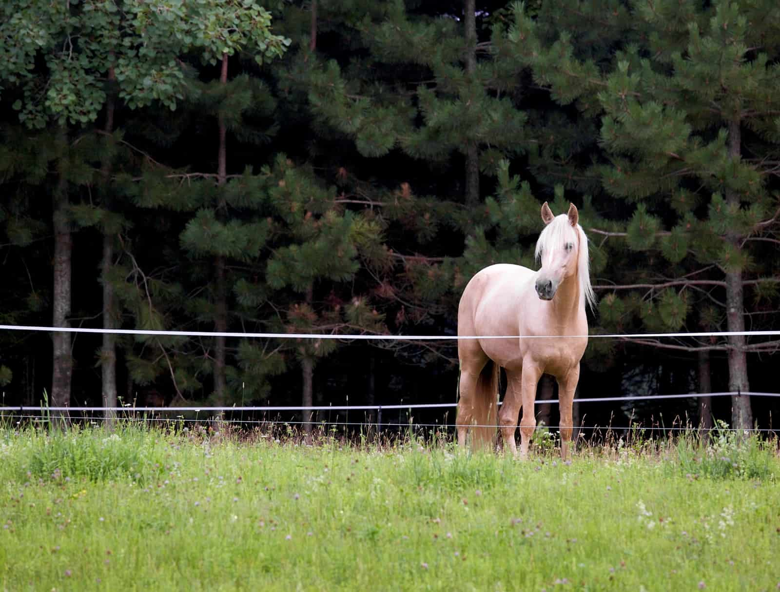 What Should I Do If My Horse Panics At The Electric Fence Wire