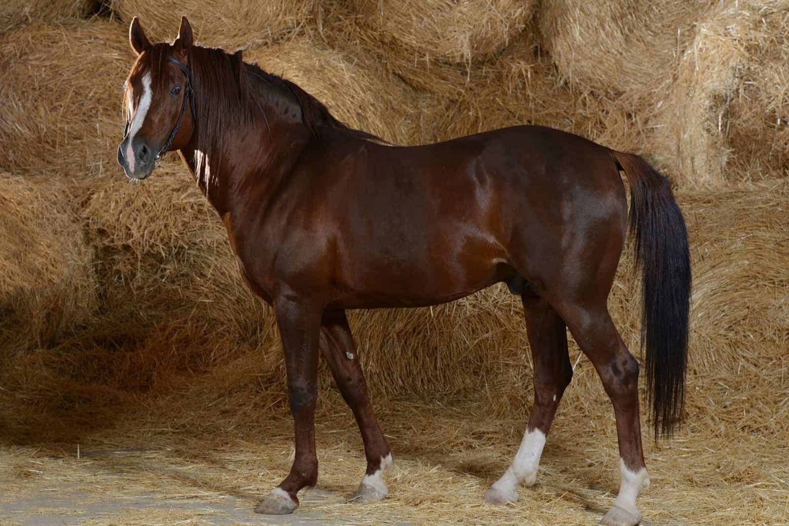 reducing horse insulin concentrations