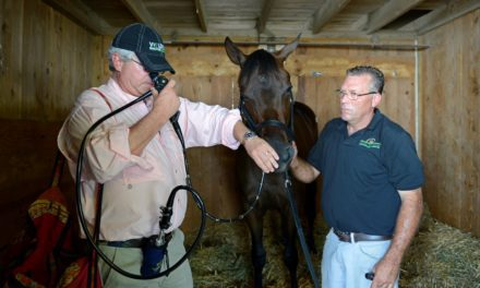 Evaluating Airway Function in Horses: How Well Do Vets Agree?