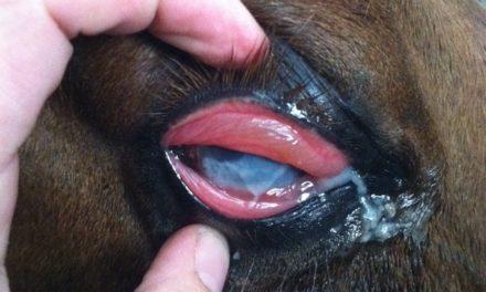Managing Equine Eosinophilic Keratoconjunctivitis