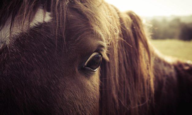 The Amazing Equine Eye