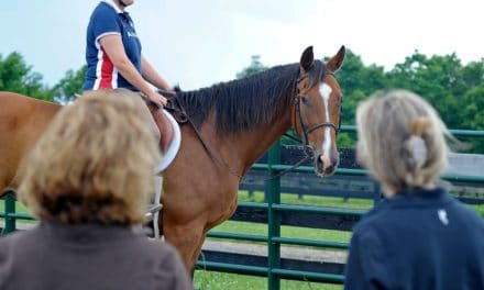 Demographics of Equine Donation and Adoption Examined