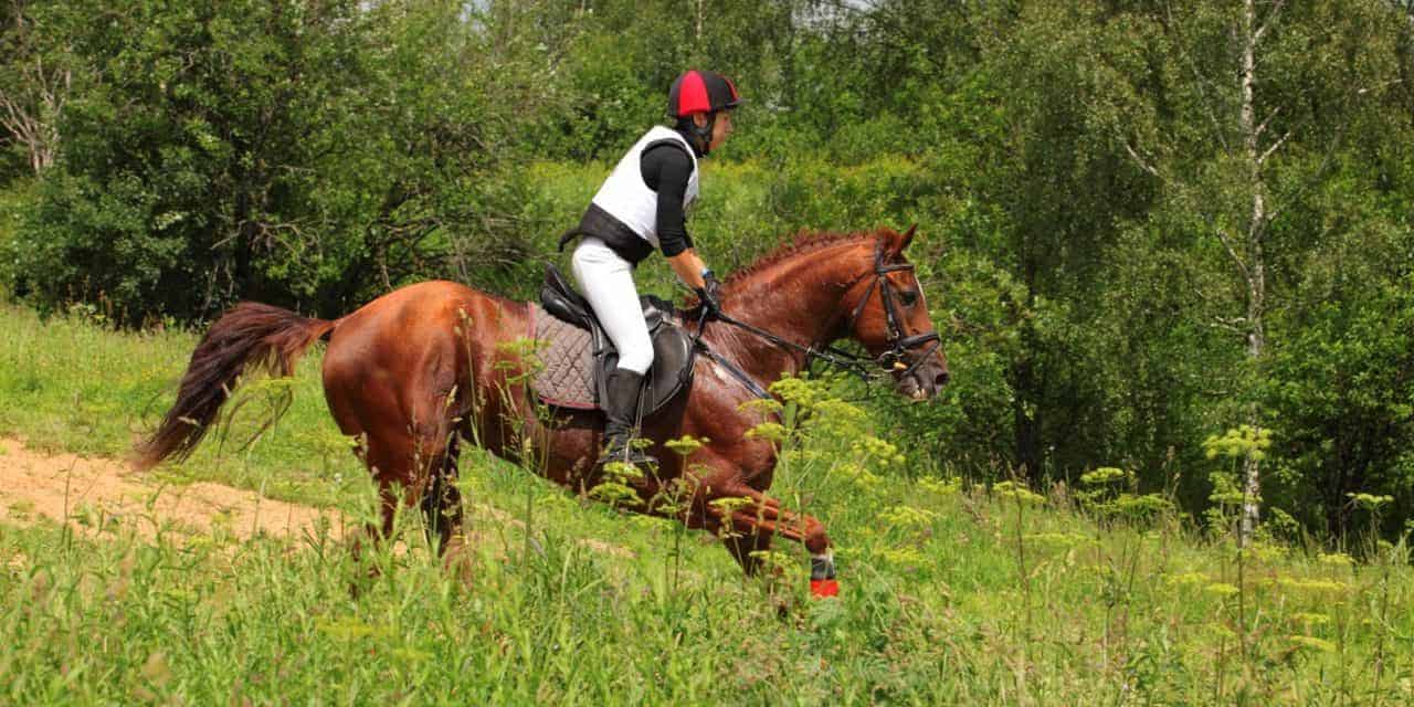 Online Equine Exercise Physiology Course Offered