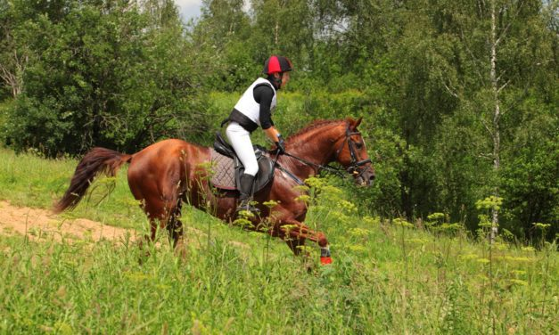 Practical Electrolyte Use in Horses