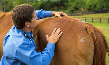 Using 'Epiduroscopy' to Diagnose Back Pain in Horses