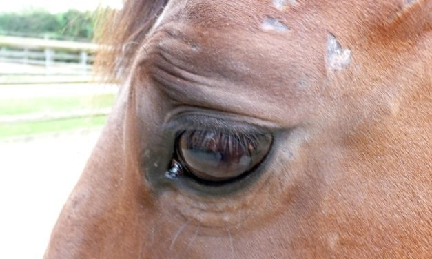 Do Eye Wrinkles Reflect a Horse's Emotional State?