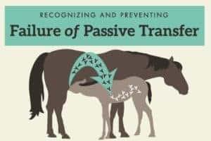 Failure of passive transfer feature image