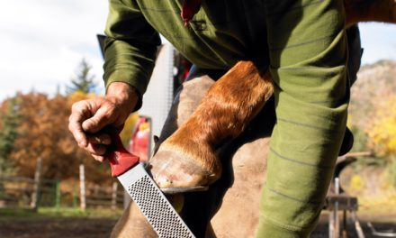 Farrier, Horse Owner Interactions Key When Managing Laminitis