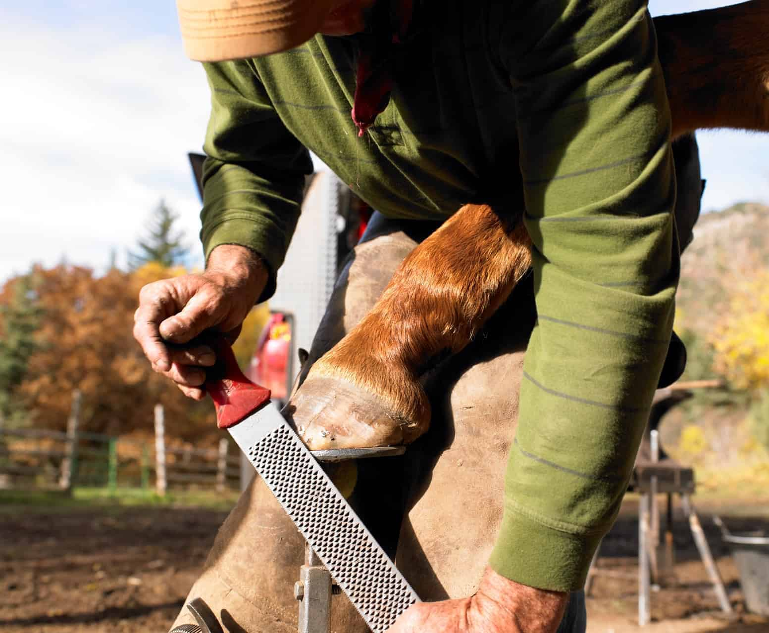 Hooves Helping Joints
