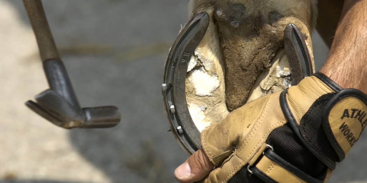 Immediate Effects of Shoeing on Horses' Movement