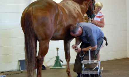 Therapeutic Shoeing for Horses With Orthopedic Injuries: Six Key Points