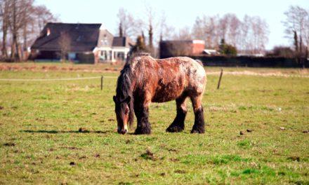 What Causes Equine Cushing's Disease?