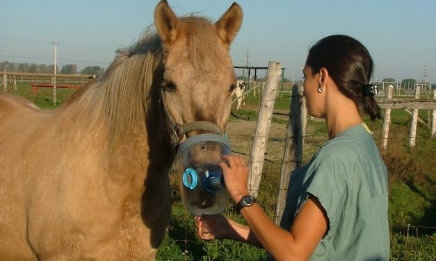 Inhaled Corticosteroids, Management Changes Help RAO Horses