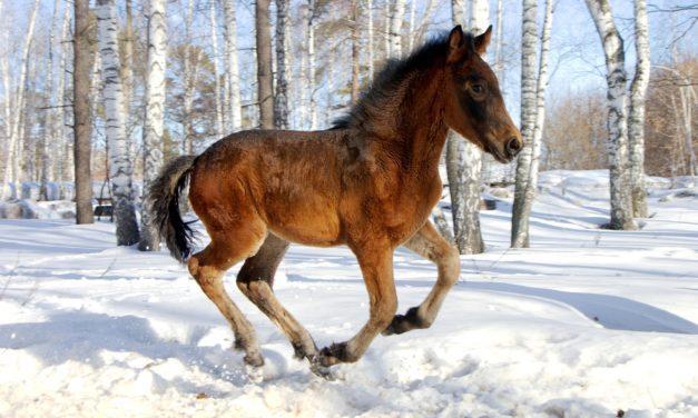 Orphan Foal Behavior
