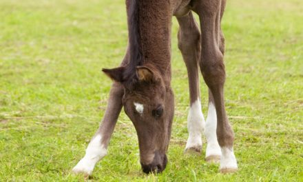Hoof Development: From Fetus to Maturity