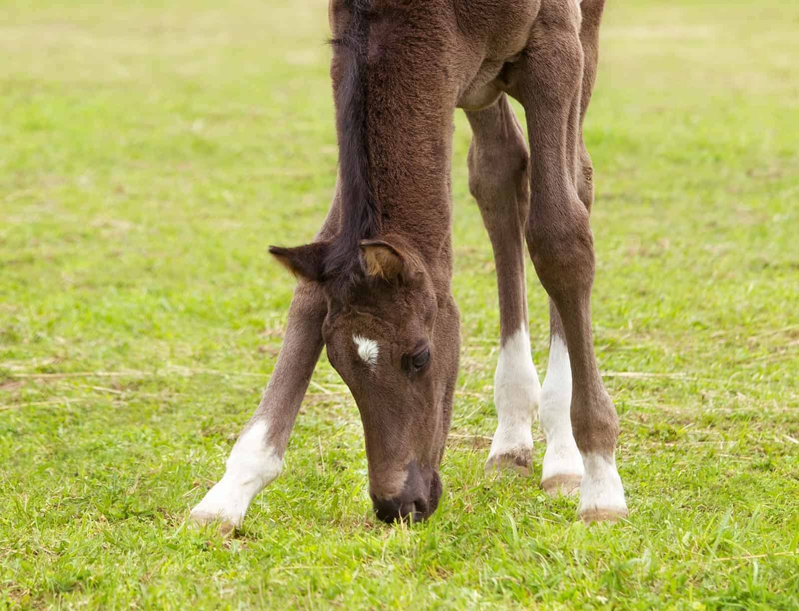 Hoof Development: From Fetus to Maturity – The Horse
