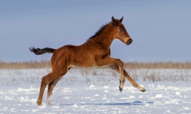 Before You Breed Your Horse: Costs and Considerations