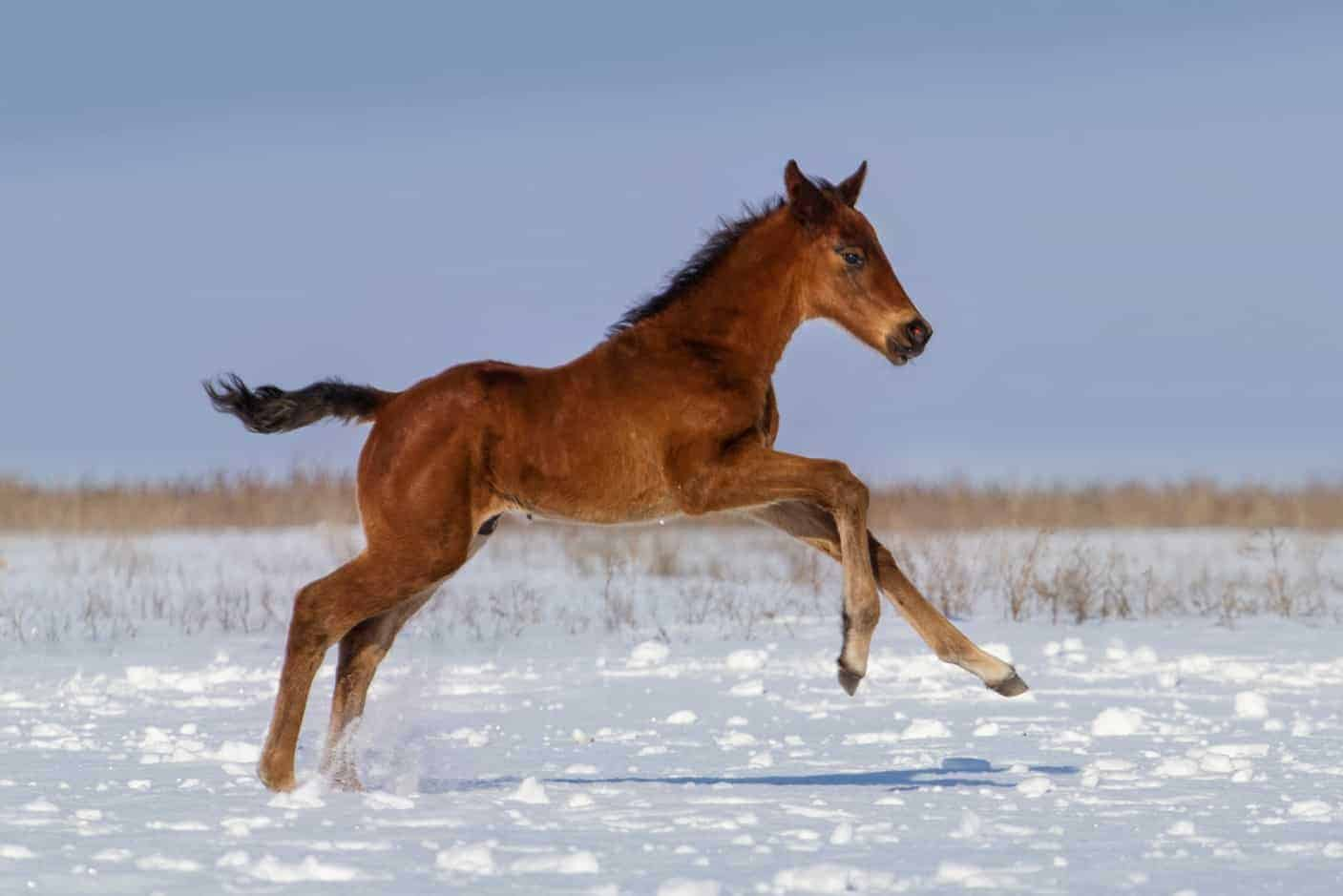 Before You Breed Your Horse Costs And Considerations The Horse