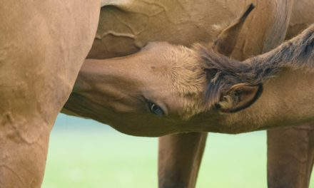 A Sensible Start: Feeding Young Horses from Foaling to Weaning